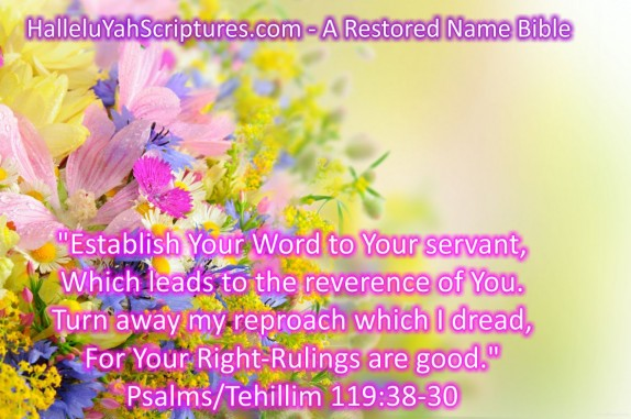 HalleluYah Scriptures Parallel + Hebrew Bible + Sacared Bible + Restored Name Bible + The Best Bible & Devine Name Bible + The Scriptures & Cepher Yahweh + Yahwah 16
