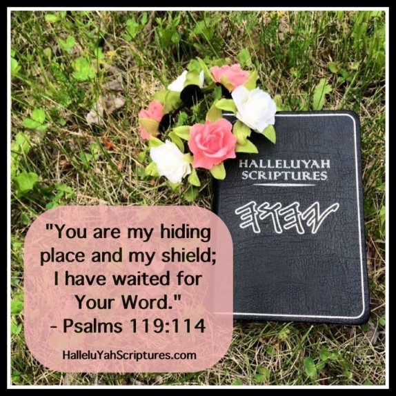 Best Bible + HalleluYah Scriptures Review + Restored Name Bible + Best Bible + Cepher + The Scriptures + Hebrew Roots bible + Sacared Name Bible In Israel + HallelluYah 8