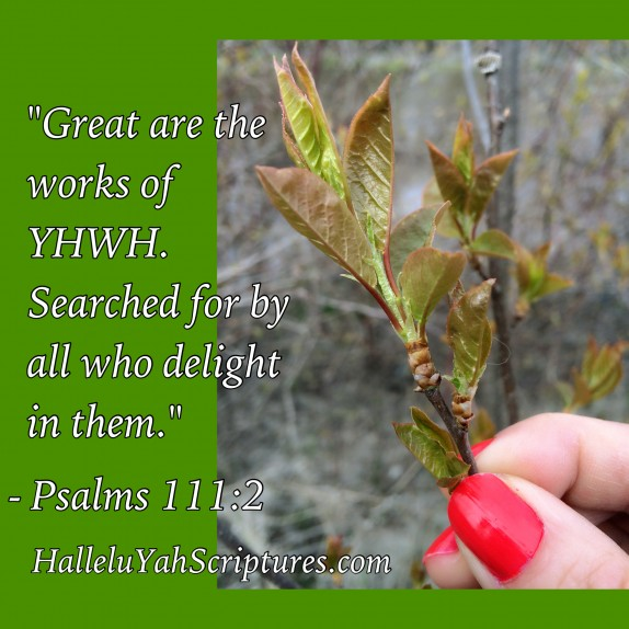 HalleluYah Scriptures Review + Restored Name Bible + Best Bible + Cepher + The Scriptures + Hebrew Roots bible + Sacared Name Bible +Yahweh + Yahwah +Yahuah Bible 2