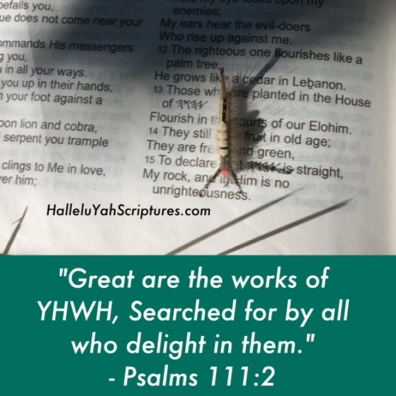 HalleluYah-Scriptures-Waterproof-Parallel-Hebrew-Bible-Sacared-Bible-Restored-Name-Bible-The-Best-Bible-Devine-Name-Bible-Cepher-bible-audio-bible-Israel-Bible-book2c